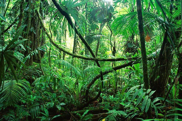 Estudio revela que el humo de los incendios fertiliza la selva amazónica y los océanos