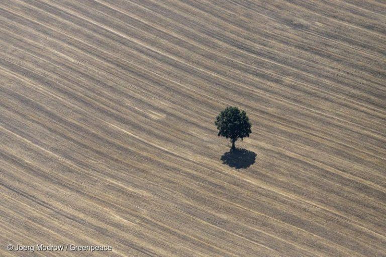 Greenpeace advierte que sequía deja a Chile a un puesto de ingresar al grupo de países más afectados del planeta