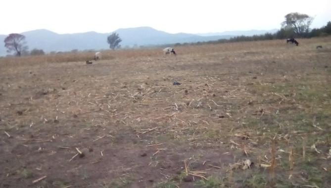 Mega Sequía sigue causando estragos: Nueve comunas del Maule son declaradas en emergencia agrícola