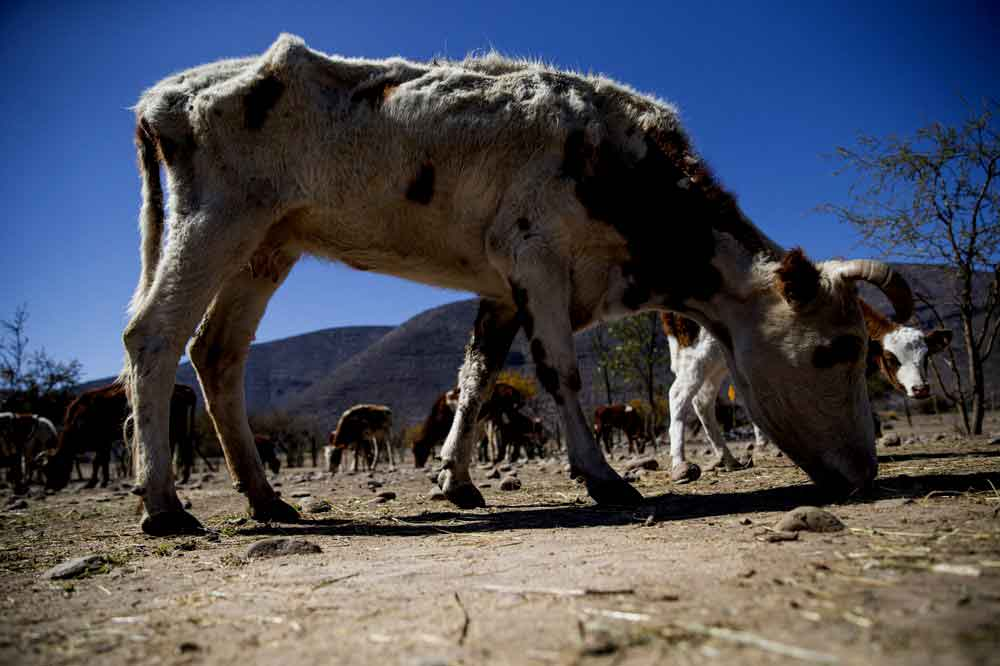 Grave SEQUÍA en Chile se transforma en preocupación mundial: La peor sequía en más de medio siglo