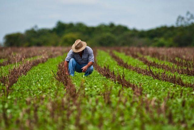 """Megasequía: SNA """"se cuadra"""" con ciudadanía y están dispuestos a sacrificar cultivos si hay que dar agua a comunidades"""