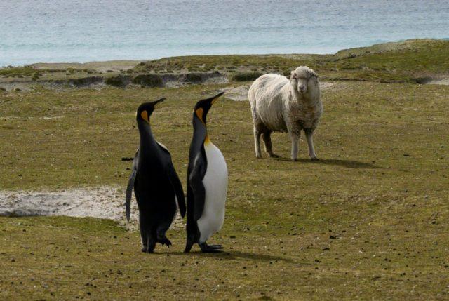 Insospechado efecto Brexit alcanza hasta las Falklands en el Atlántico Sur