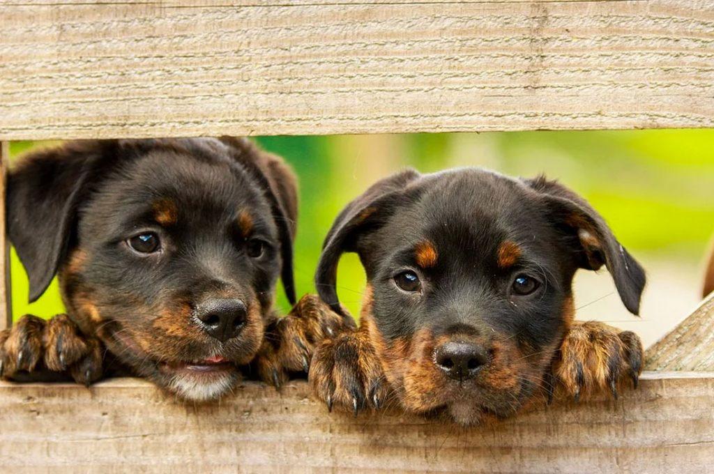 Perro Chocolate convoca nueva jornada de adopción canina