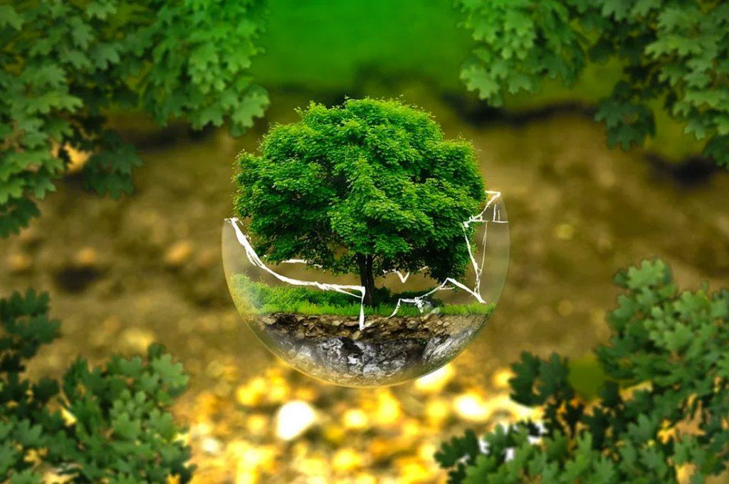 Entretención sustentable: productora de eventos contribuye y aminora el impacto ambiental en sus eventos