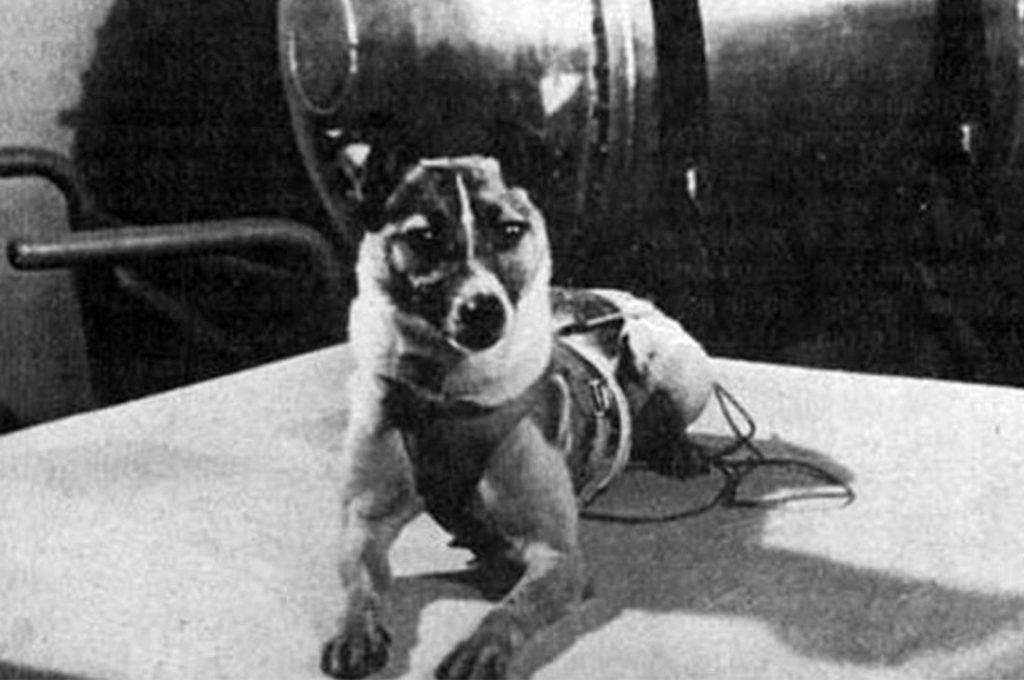 La perra Laika se convirtió hace 62 años en el primer ser vivo espacial
