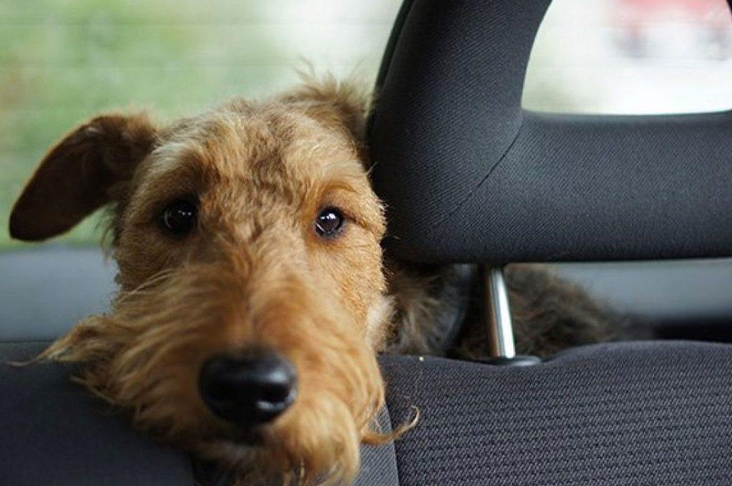 """Este es el """"mejor SUV para mascotas"""" reconocido en Reino Unido"""