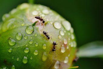 Hormigas, abejas y moscas de la fruta: Los nuevos avances en Inteligencia Artificial
