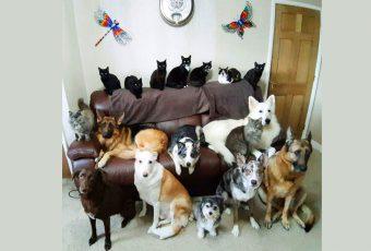 Consiguió que sus 17 mascotas posaran para una foto