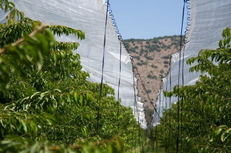Los principales errores del sector agrícola que evitan crecimiento de pequeños exportadores