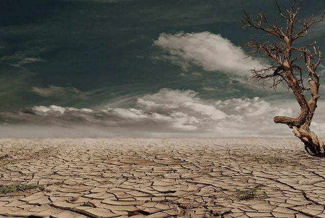 Estado del Clima Global: Chile también sufre el impacto de olas de calor y sequías