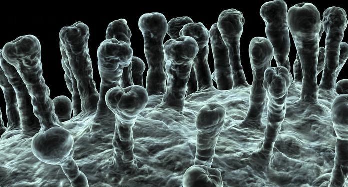 Alemania confirma primer caso de coronavirus