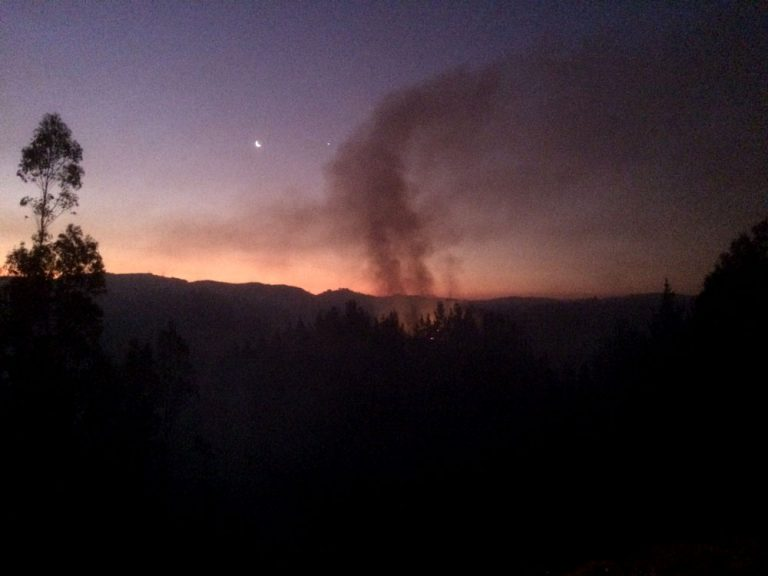 ONEMI: Alerta roja para Concepción por incendios forestales