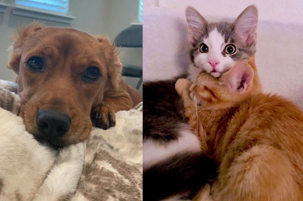 Las fotos más reconfortantes de mascotas rescatadas