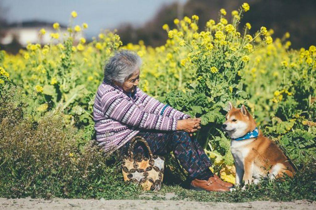 El conmovedor vínculo entre su abuela y su perro shiba inu