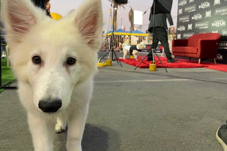 La primera Avant Premiere exclusiva para perros