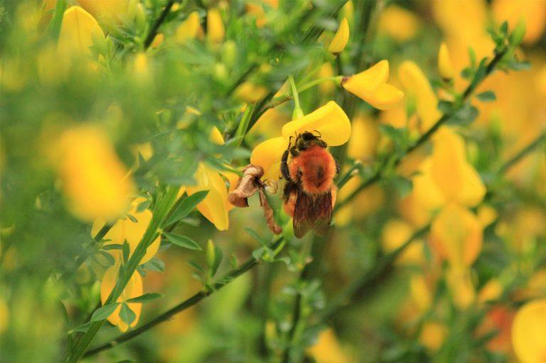 Día Mundia de la Naturaleza: Seis razones (más) pendientes para este año