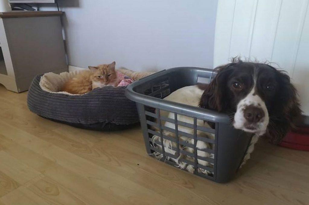 Gatos malvados que les robaron la cama a los perros