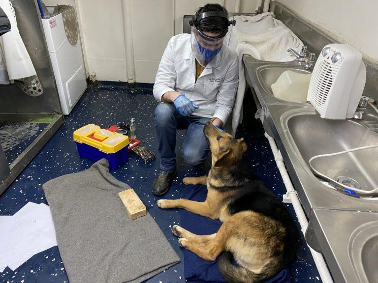 En medio de la bahía de Concepción y el mal tiempo, Armada efectúa exitoso rescate de perro