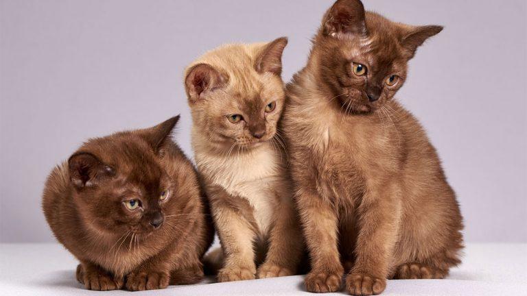 Derribando los mitos más comunes sobre los gatos