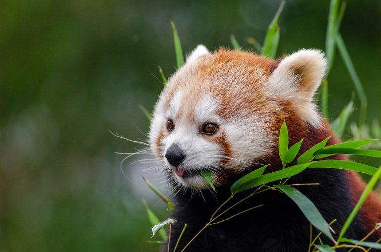 La actividad humana provoca la pérdida del 70% de los animales vertebrados en el mundo