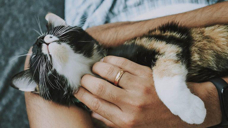 Adopción de mascotas: lo que debes considerar antes de tomar esta importante decisión