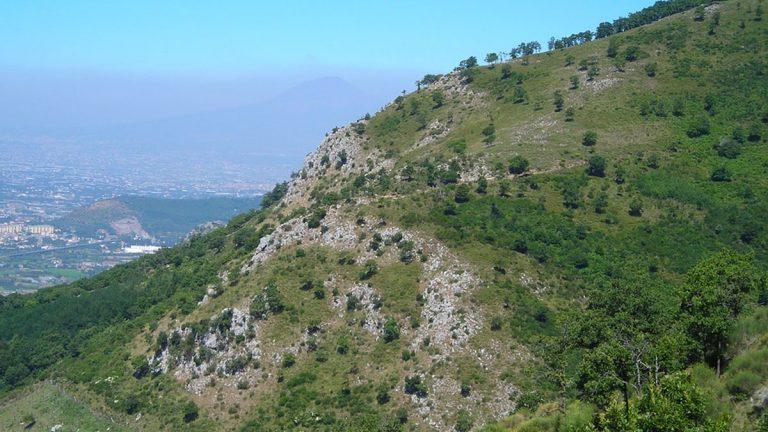 WWF Chile promoverá soluciones basadas en naturaleza y restauración de paisajes