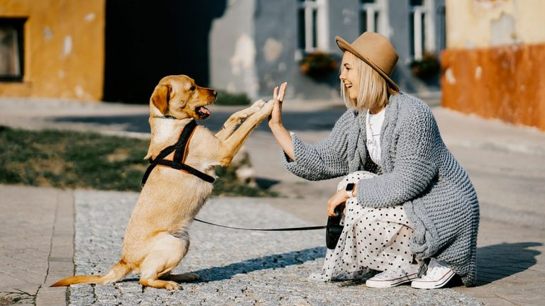 Así llama esta dueña a su perro sordo para que vuelva a casa