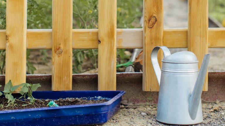 Cómo tener nuestra propia huerta en casa y qué cosechar