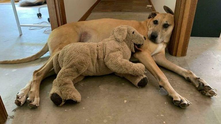 Toda mascota tiene su juguete favorito