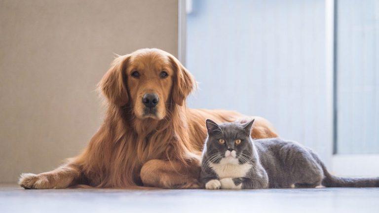Primera versión de concurso científico para mejorar la vida de las mascotas