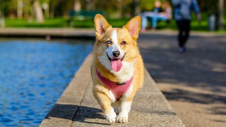 Toma estos resguardos y cuida a tu mascota del calor