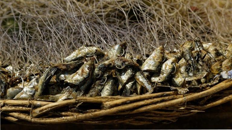 Seis medidas con perspectiva territorial para recuperar la merluza común