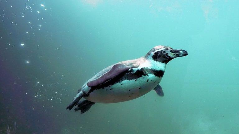 Viral: Video capta el momento en que un Pingüino salta a un bote para salvarse de unas ballenas