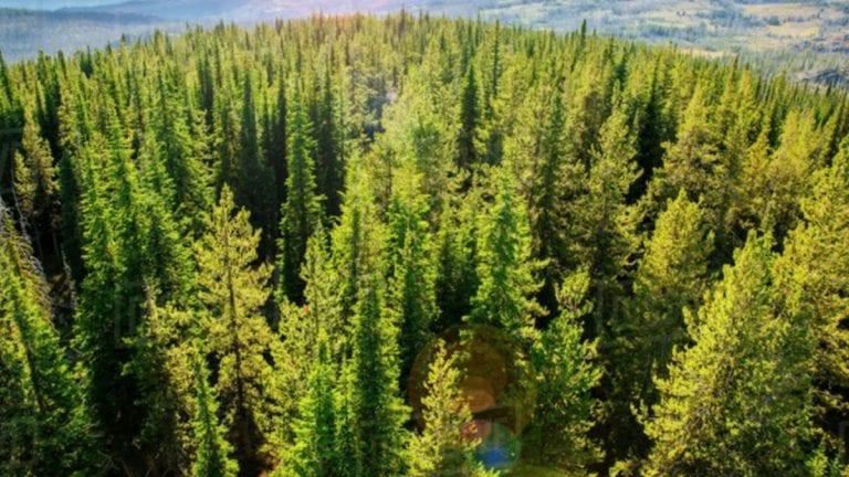 Lucha contra el cambio climático: Salesforce supera el hito de los 10 millones de árboles en 12 meses