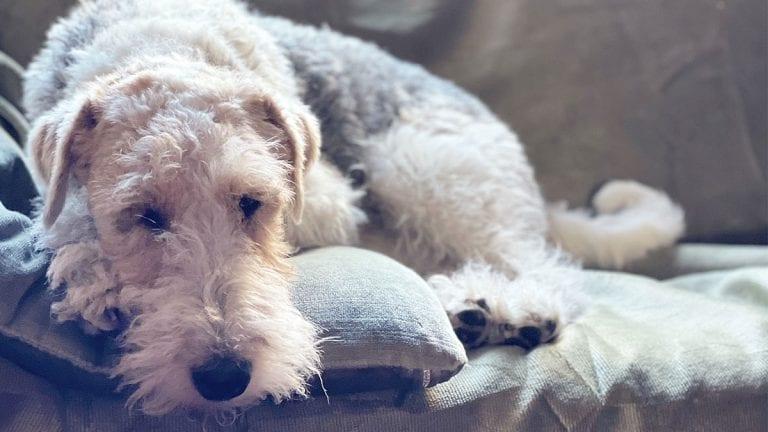 ¿Cuánto cuesta tener un perro en Chile?