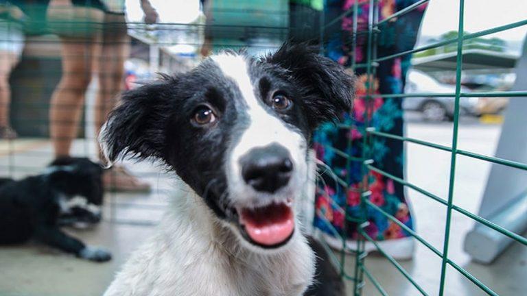 Mall Barrio Independencia realiza Jornada de Adopción y habilita sistema Pet Friendly