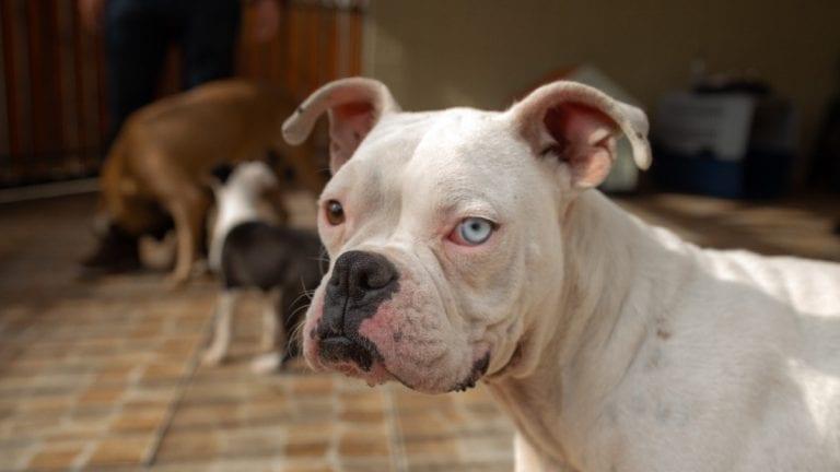Día Mundial del Perro: Las Consecuencias del Maltrato Canino