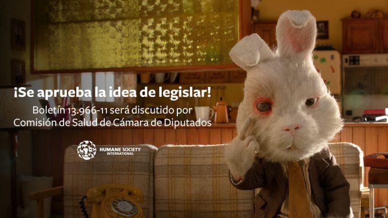 Comisión de Salud aprueba en general prohibición de experimentación de cosméticos en animales