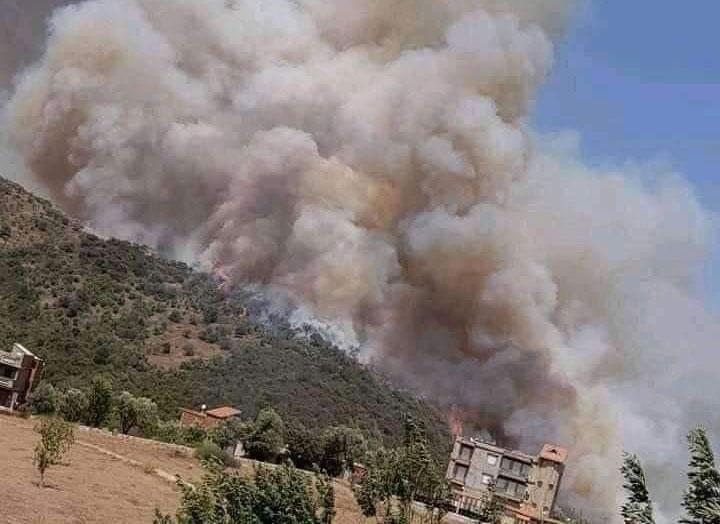 Cambio Climático: Más de 30 incendios forestales en Argelia ya dejan 4 muertos