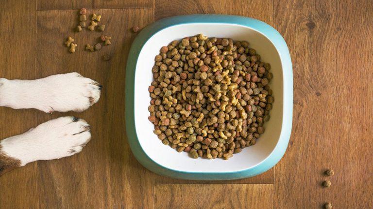 ¿Qué leemos cuando nos fijamos en el etiquetado de los alimentos para mascotas?