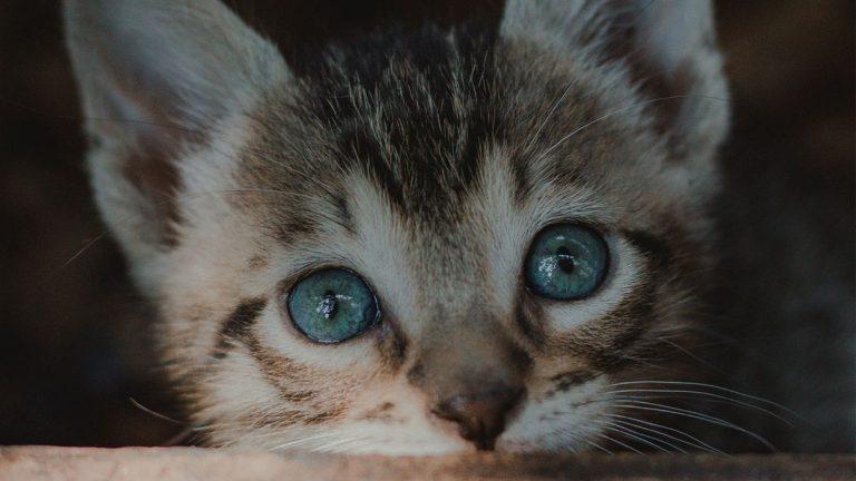 6 increíbles consejos para fotografiar a tus mascotas regalonas