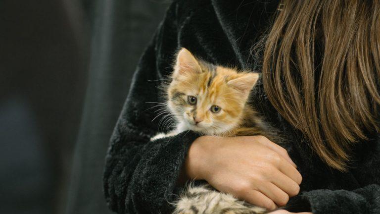 Nueva jornada de adopción de mascotas y bienestar animal en Open Kennedy