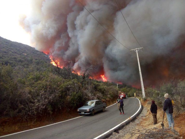 Cinco brigadas, bomberos y dos aeronaves combaten incendio forestal en Caleu