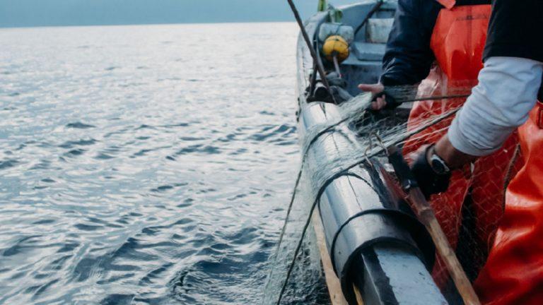 En septiembre: WWF llama a respetar veda de la merluza chilena