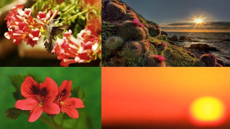 Cinco tips para fotografías primaverales distintas e inolvidables